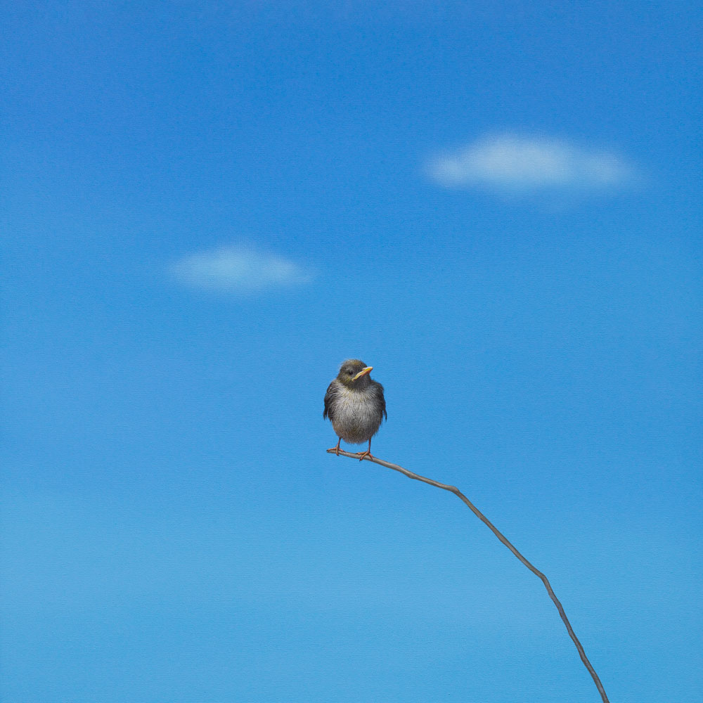 black bird looking left