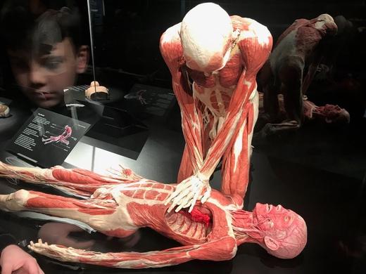 body worlds london triplet two cXFX