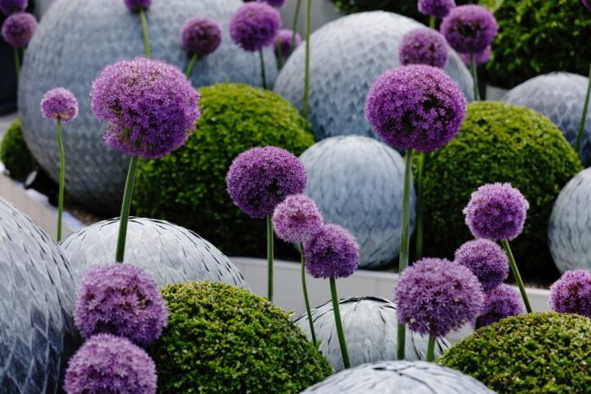 Flowers and Scultures